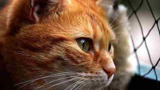 cat-3279064