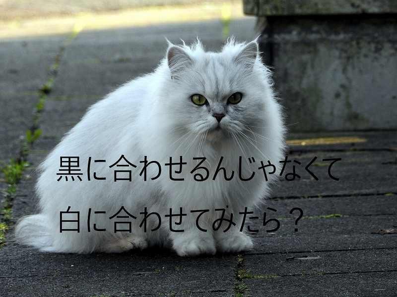 white-cat-2903122