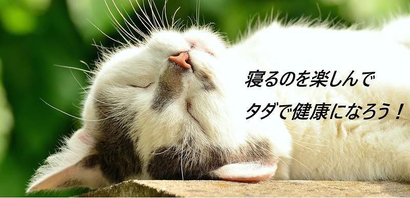 suimin-cat